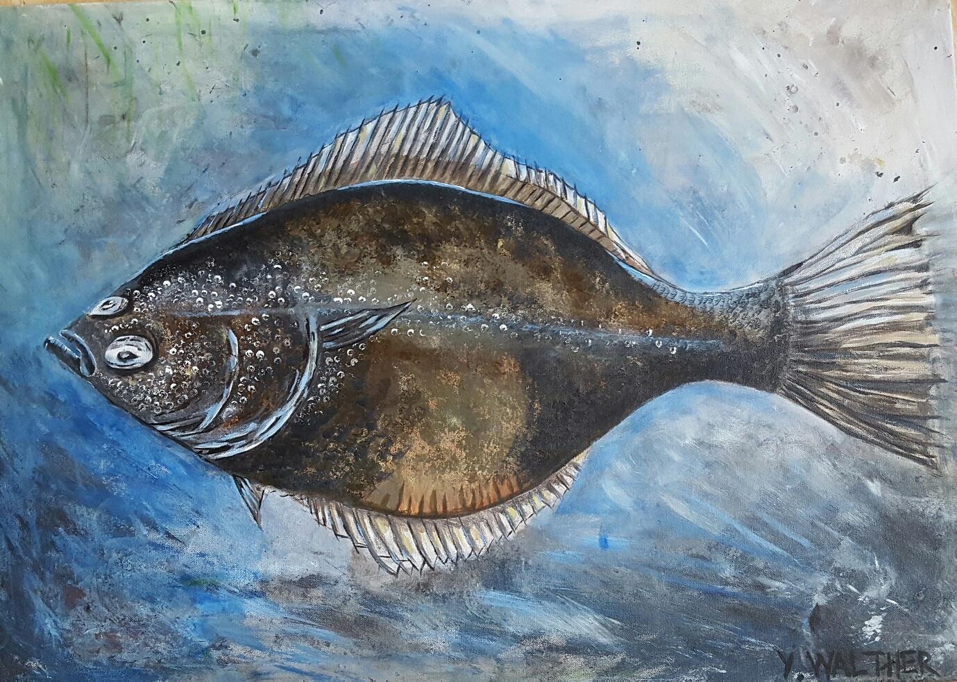European Flounder /Skrubbskädda